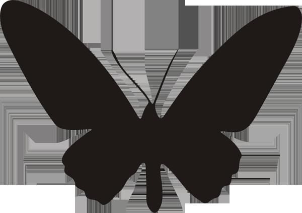 Schmetterling -023
