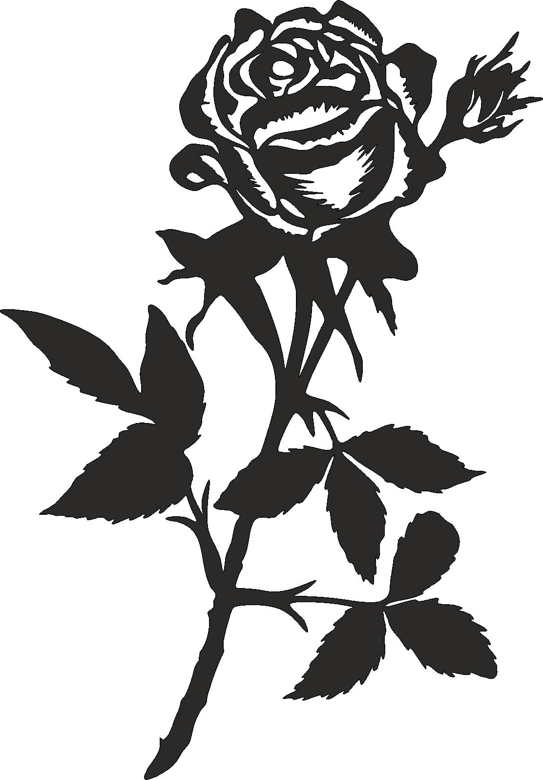 Rose -002