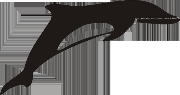 Delfin -001