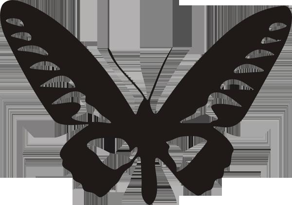 Schmetterling -022
