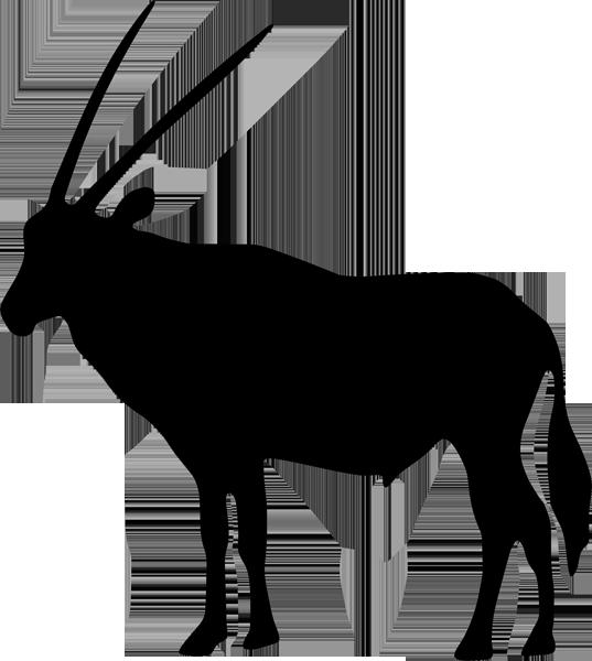 Antilope -001