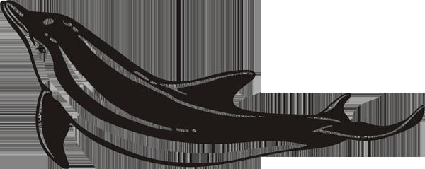 Delfin -005
