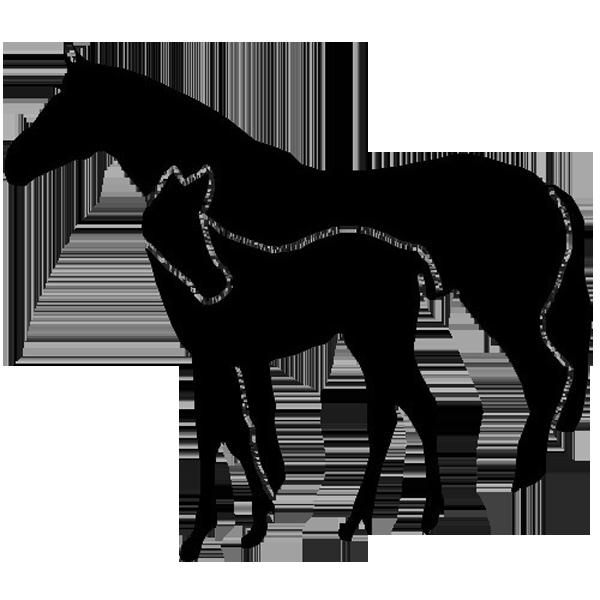 Pferd -001