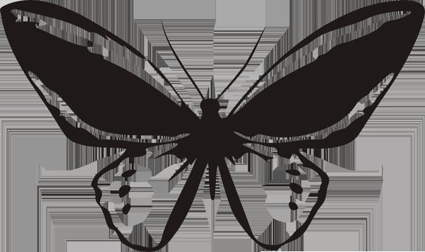 Schmetterling -004