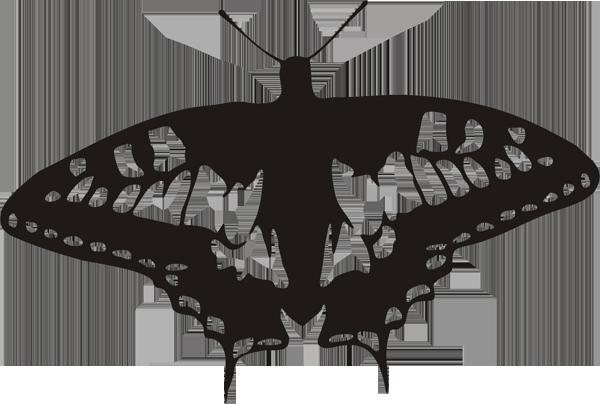 Schmetterling -016