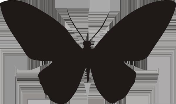 Schmetterling -005