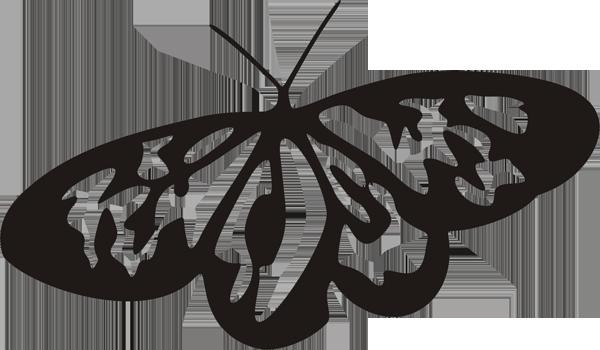 Schmetterling -014