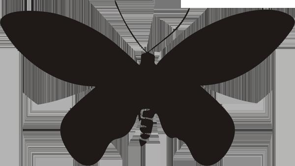 Schmetterling -009