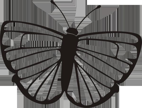 Schmetterling -012