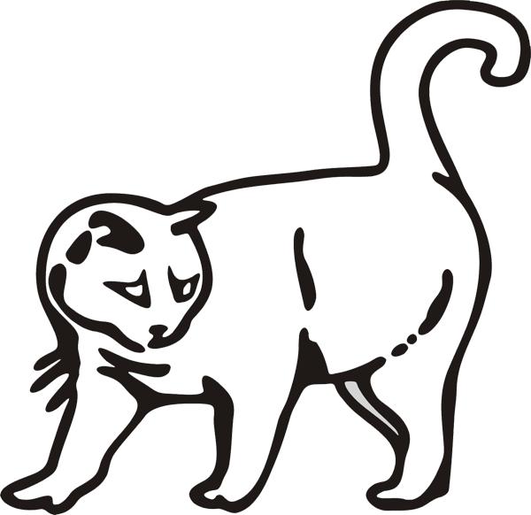Katze -007