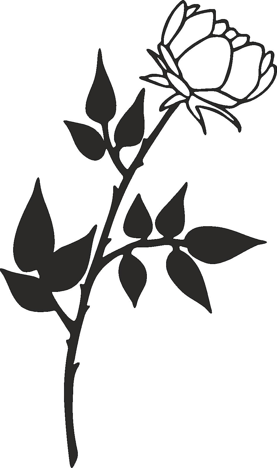 Rose -003