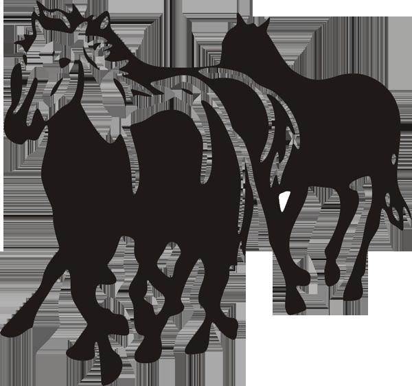 Pferd -007