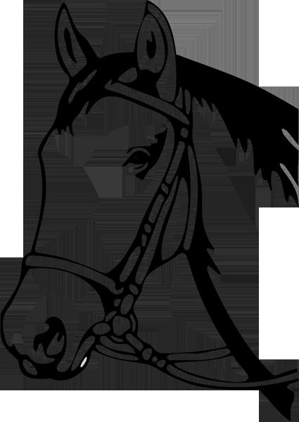 Pferd -004