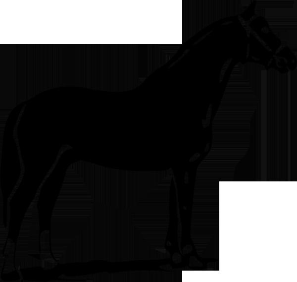 Pferd -018
